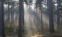 Fairies' Forest