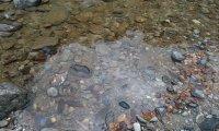watery stillness