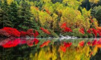 Autumn forest camp