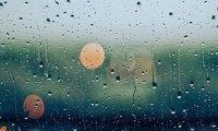 Soft Rain with Birdsong