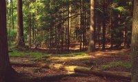 Quiet windy forest