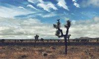DESERT ZENFUL