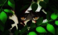 Mononoke's Forest