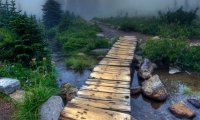 For a walk in the deep forest mist