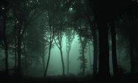 Rainy Nightscape