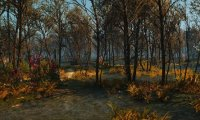 Crookback Bog from Witcher 3: Wild Hunt