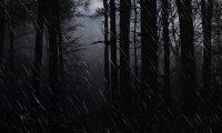 Rainy forest night