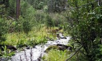 Sounds of the Fish Creek Trail
