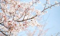 Springdream