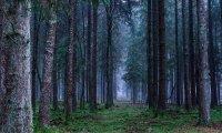 Ambient sound for TRPG forest scenario