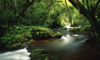 Rainforest Africa