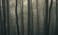 Forest Horror