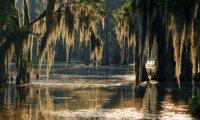 Swamp Thing's Bayou