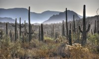A Light Breeze in the Desert Morning