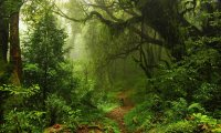 Forest ambiance