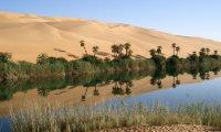 Sandswept Delta