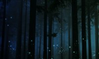 peaceful nighttime forest