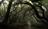 Dark forest ambiance