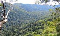 Strolling through an Australian open Forest