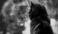 Wind chimes, cats, fire, rain