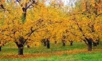 Seidrmadr's Orchard