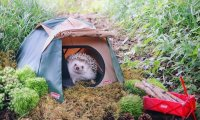 Rainy Forest Camping