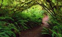 Gentle rain within forest