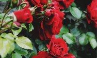 o assassino de bloomsbury