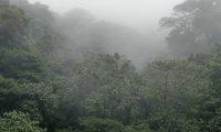 Rainforest sleep