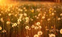Sunny, Summer Meadow