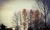 Autumn Night Forest