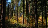 Autumn Fairy Forest