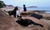 A clan of cats who make their home by the sea.