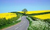 Roadside Summer