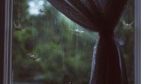 Cottage Summer Night Rain