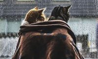 You're in your cottage with your cat when it starts to rain