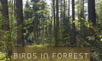 Birds in the forest