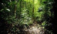 Lost in the Yucatan Jungle