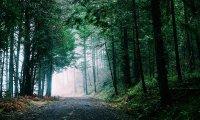 Meridian - Toderden Forest