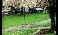 A Soft Spring Rain