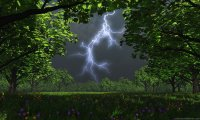 A dragon's forest in the midst of a rainstorm