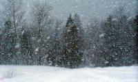 Gryffindor in a snowstorm