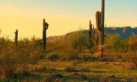Sonoran Desert Ambiance