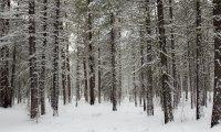 Walking in a winter wood