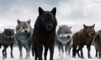 Native American Wolf Pack