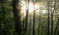 Nostalgia forest