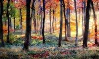 Autumn Fairies Forest