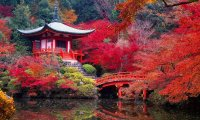 The Fire Nation Palace's Secret Gardens