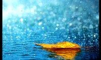Rain rain everywhere