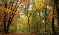Walking Through an Autumn Forest